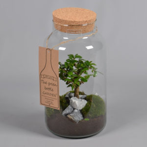 The green Bottle Garten – Glaszylinder mit Kork und Bonsai